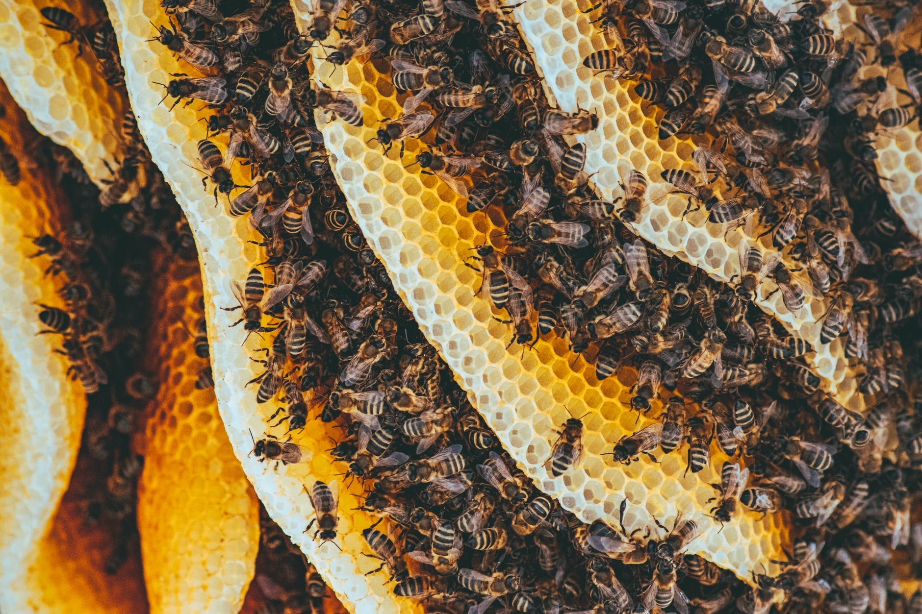 types of honey bees in a colony